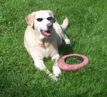 Samantha sunning with her Frisbee®