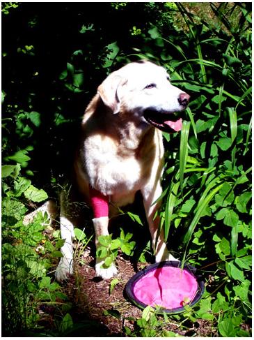 Samantha Sporting her Pink Elbow Wrap