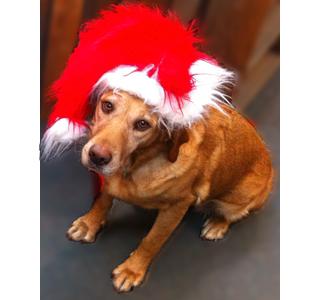 Miss Scarlett, Christmas Spirit's Mascot